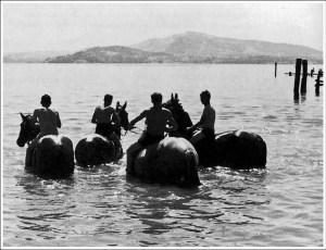 Gustave Roud  Baignade des chevaux , 1937.  Cahiers Gustave Roud, 4. L'imagier (Association des Amis de Gustave Roud, Lausanne et Carrouge,