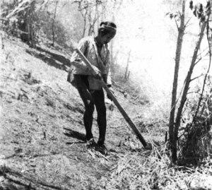 Firing (Avril) - Cet agriculteur de montagne se déplace à travers un chemin de feu de protection avec une torche de bambou séchées craqué.