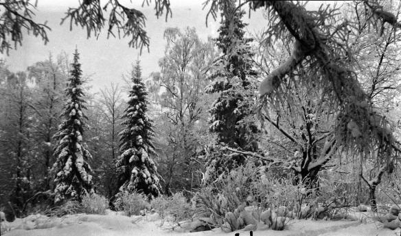 winter-forest-in-raivola