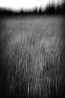 Hannaka_Landscape-1-Gd-format.jpg