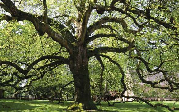 6122ee3911_50144437_fs-diapo-arbres-remarquables-1.jpg