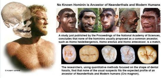 Sapiens not evolved from Earth hominoids teeth