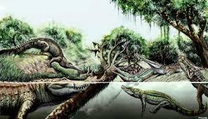Cambrian 1b