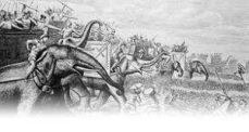 Alexander army elephant2
