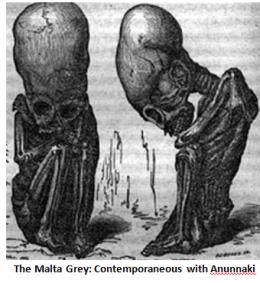A a Malta Grey Skeleton