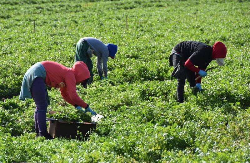 Vacunar a los trabajadores agrícolas