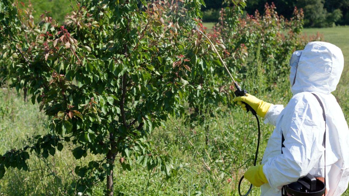 El pesticida clorpirifos
