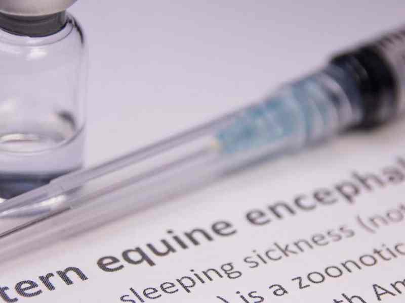 NCDHHS identifica nuevo virus de encefalitis equina del este