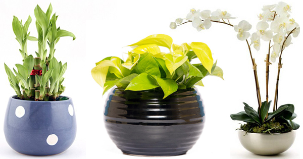 How Indoor Air quality can be improved 24 x 7 with these Feng Shui plants? | Blog.Nurserylive.com | gardening in india