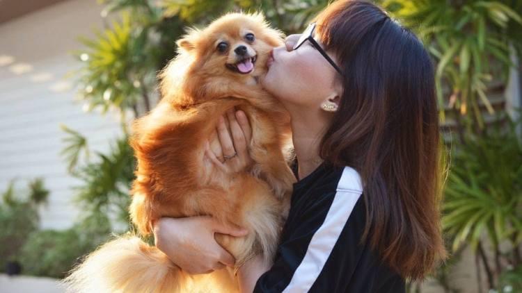 8 Best Dog Breeds For Gemini Zodiac Signs