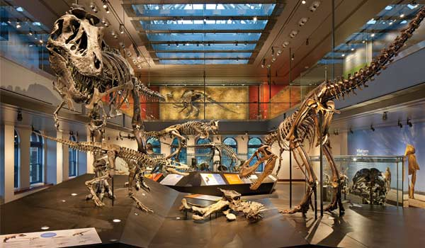 Focus Lighting: The Natural History Museum of Los Angeles County