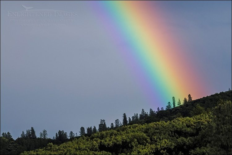 Photo: Rainbow over a forest after a storm, Whiskeytown National Recreation Area, Shasta County, California