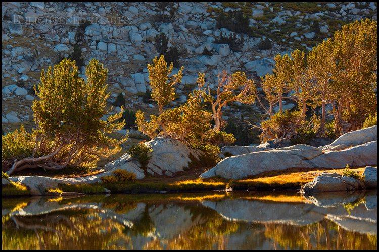 http://enlightphoto.com/photo-info/tiga2076-backlit-trees-vogelsang-lake-photo.html