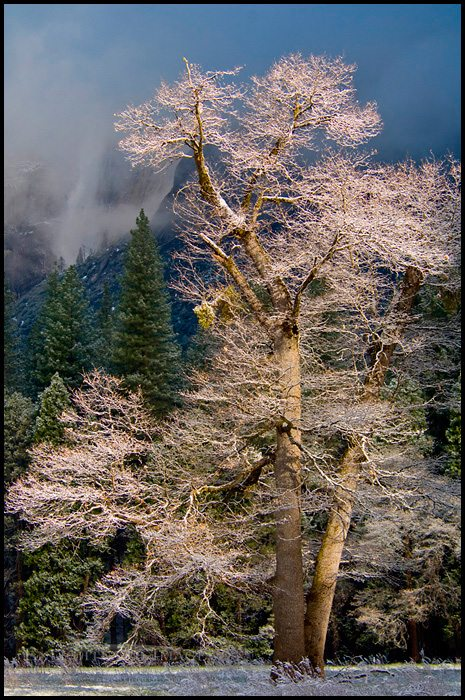 http://enlightphoto.com/photo-info/vly22615-tree-snow-yosemite-valley-photo.html