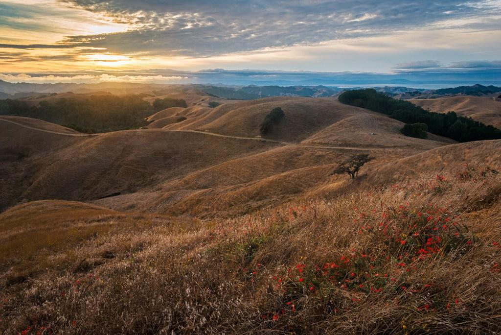 Photo: Briones Regional Park, Contra Costa County, California
