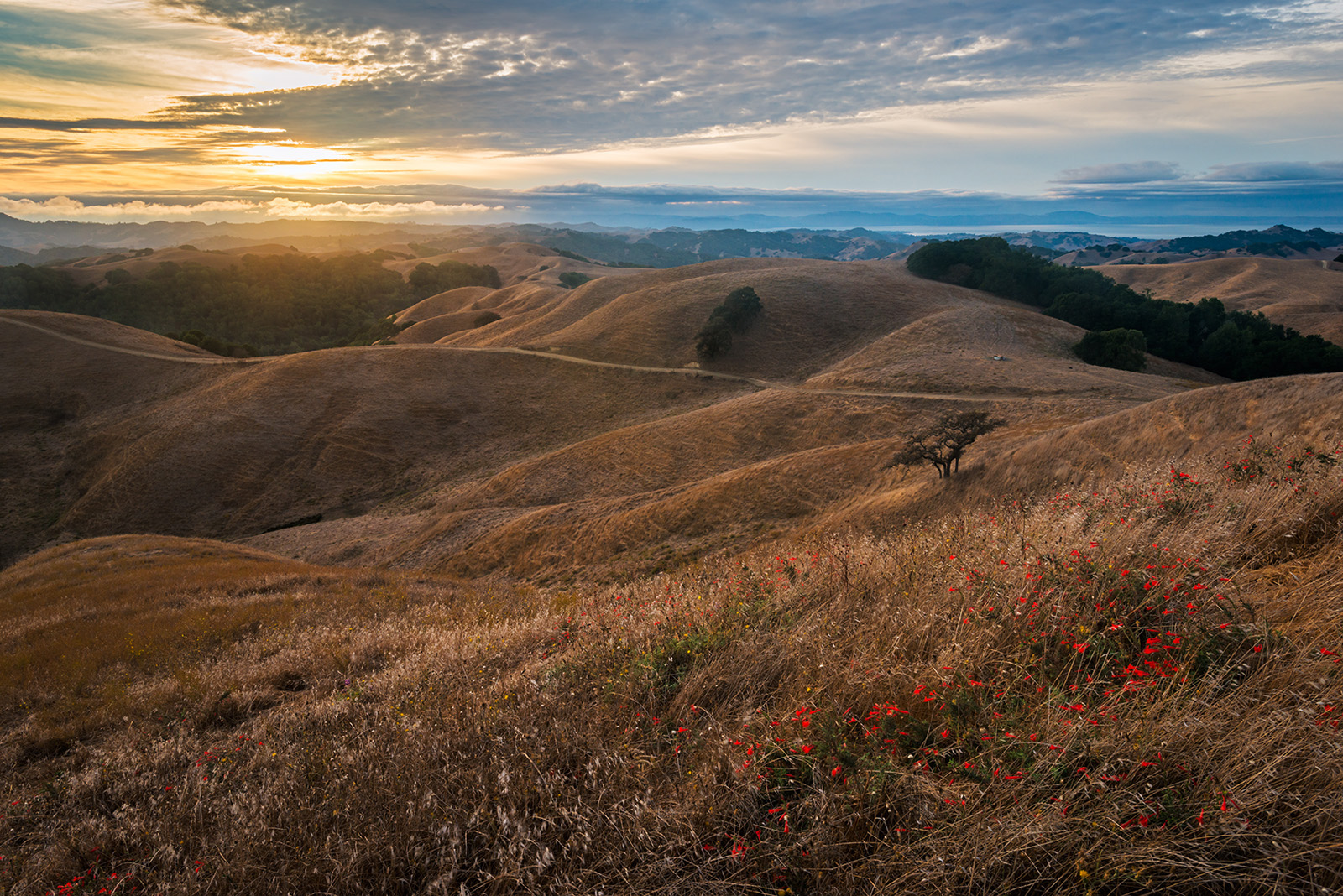 Photo: Briones Regional Park, Contra Costa County, California