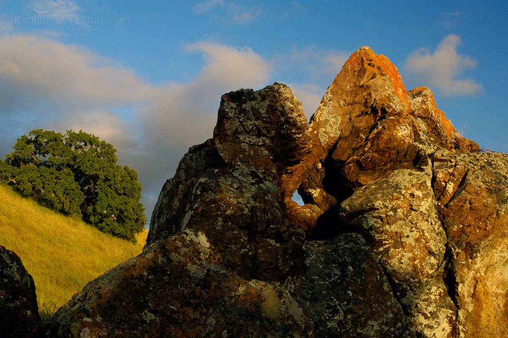 Photo: Lone oak tree and lichen covered rock at sunset, Mount Diablo State Park, California