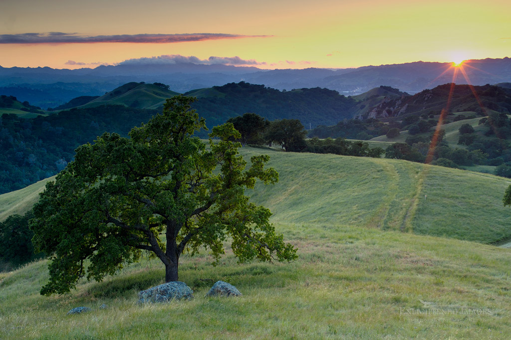Photo: Lone oak tree and rolling hills in spring and golden sunset light, Mount Diablo State Park, California