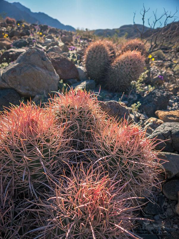 Photo: Cactus, Death Valley National Park, California
