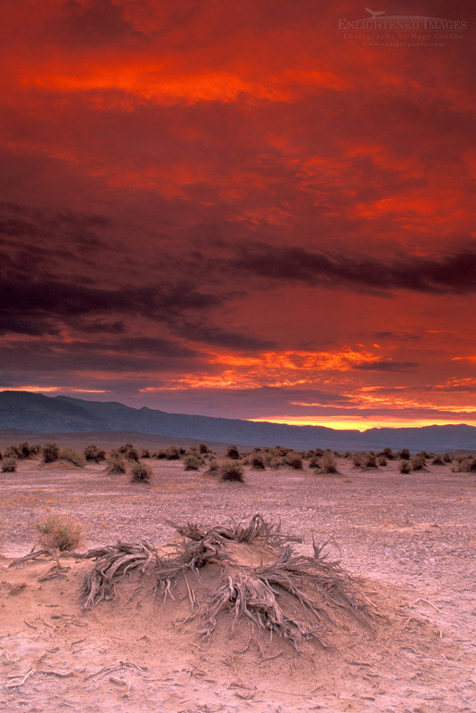 Photo: Storm clouds over arrowweed roots in sand at sunrise at Devils Cornfield, Death Valley National Park, California