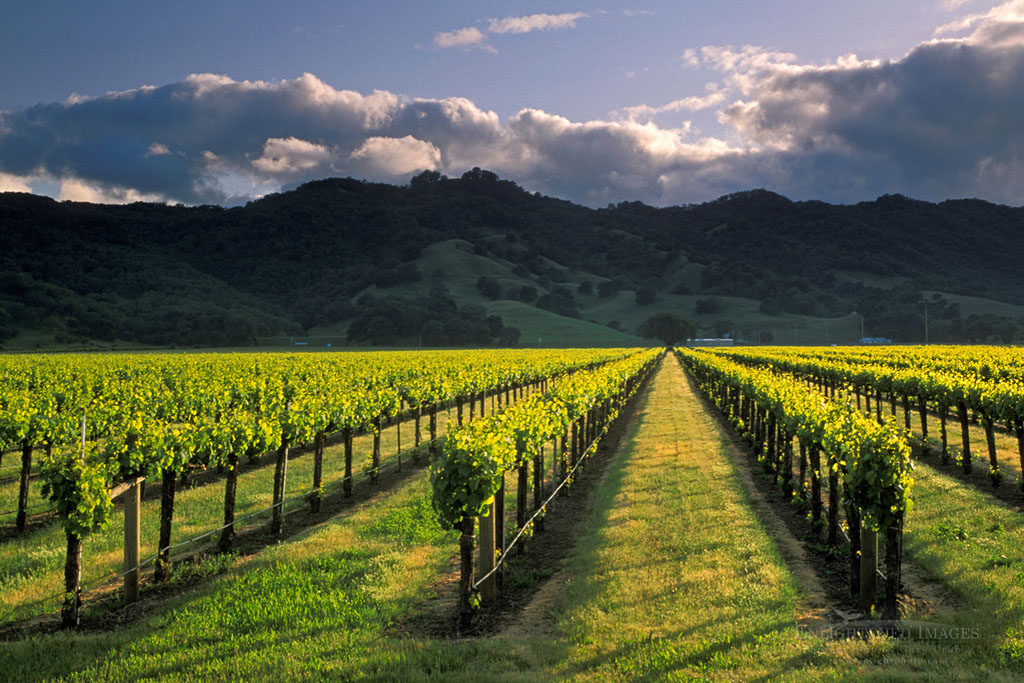 Photo: Sunset over hills and vineyard in spring, near Hopland, Mendocino County, Californi