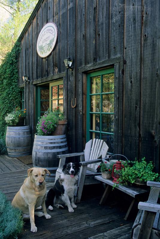 Photo: Pet dogs on patio, Maple Creek Winery Yorkville, Mendocino County, California