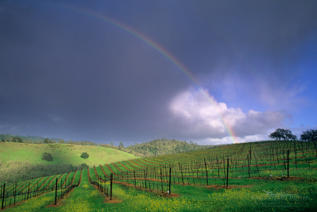 Photo: Rainbow and clearing storm in spring over vineyard along Conn Valley Road, Napa County, California
