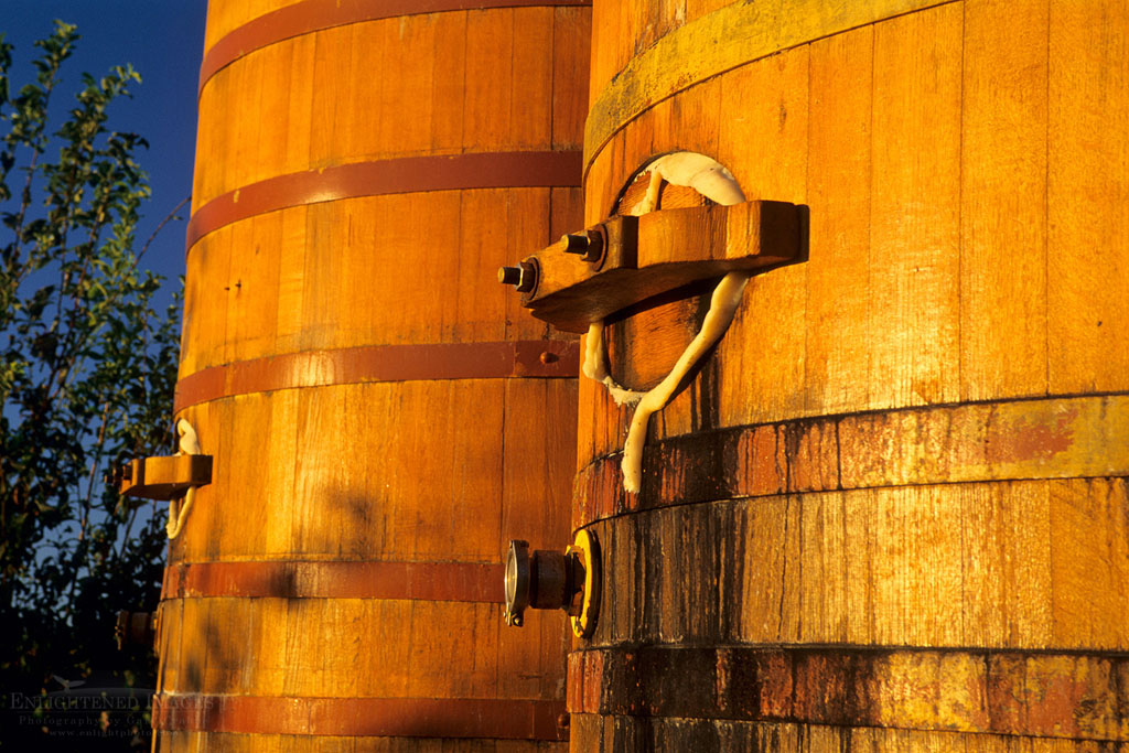 Photo: Sunrise light on wooden wine barrels at Bouchaine Vineyards, Carneros Region, Napa Valley, Napa County, California