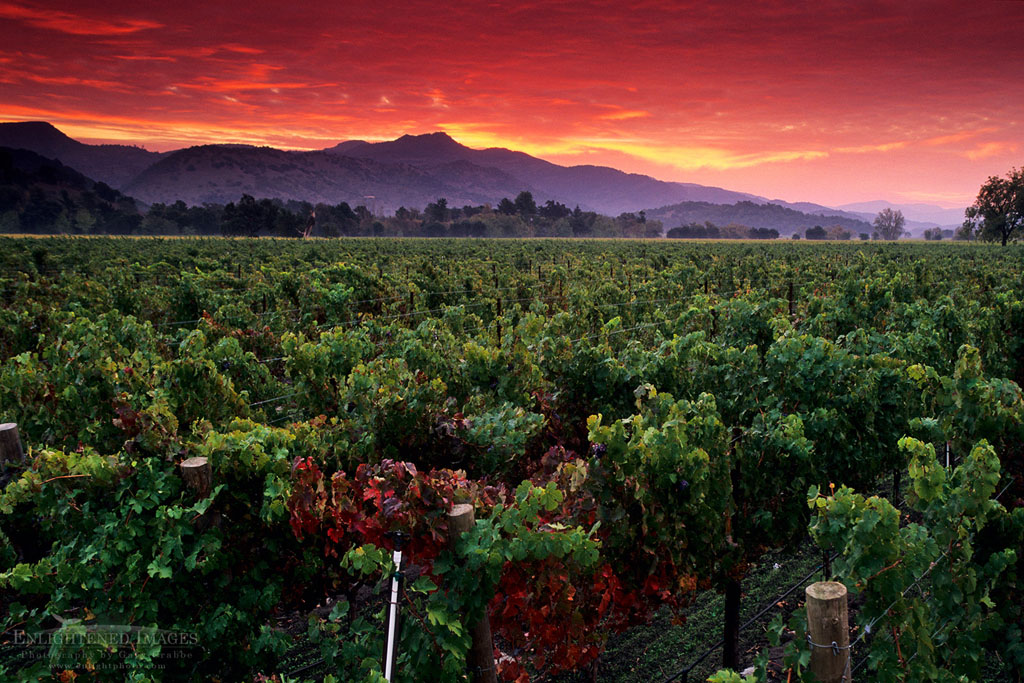 Photo: Stormy red dawn sunrise over vineyards near Yountville, Napa Valley, Napa County, California