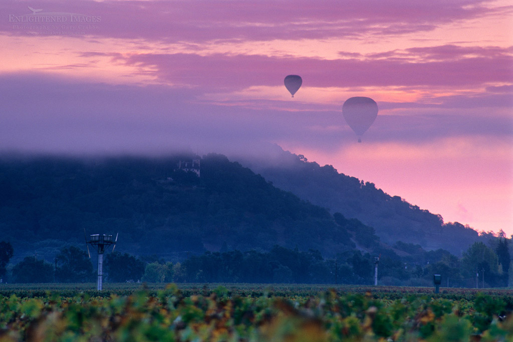 Photo: Hot Air Balloons in clouds and fog at sunrise over vineyards near Oakville, Napa County, California