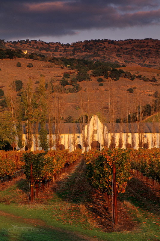 Photo: Sunset light over vineyards at Chimney Rock, Staggs Leap region of the Silverado Trail Napa County, California