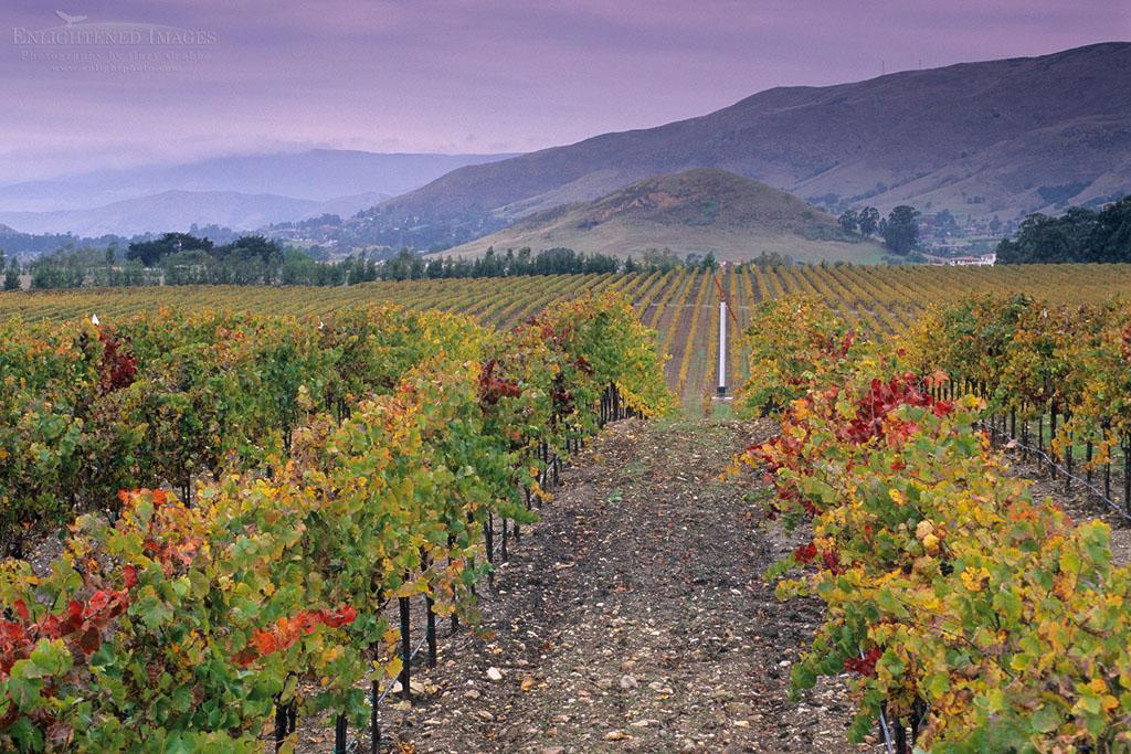 Photo: Vineyards in the Edna Valley in fall, near San Luis Obispo, San Luis Obispo County, California