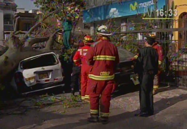 Auto cae sobre un árbol (Canal N)
