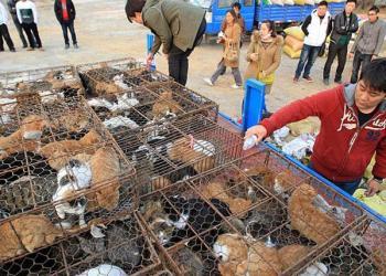 Gatos rescatados en China
