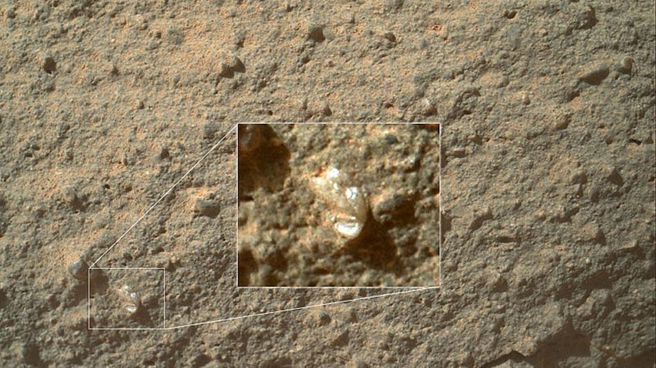 Supuesta flor en la superficie de Marte que impresiona (Foto: http://mashable.com)