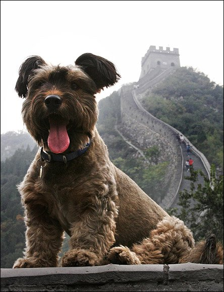 Oscar en la Muralla China (DailyMail)