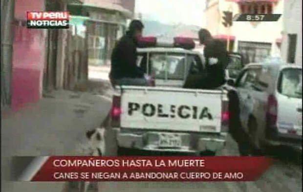 Perros fieles (Tv Perú)
