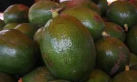 Algunos productos agros  – como la palta - se vienen consolidando en los diferentes mercados del mundo.