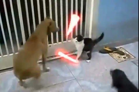 Star Wars: Los gatos Jedi y sus mejores peleas (Video)