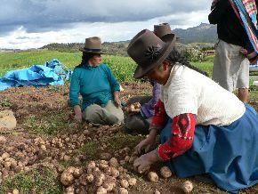 Demandan programa nacional de manejo de plagas para el agro