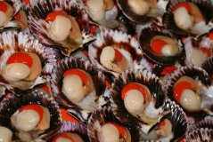Las exportaciones de conchas de abanico registraron un ascenso en los primeros cinco meses del año.