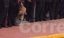 (Video) Perrito callejero maltratado y golpeado por seguridad de Ollanta Humala