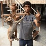 Foto de perrito chihuahua crucificado indigna a redes sociales