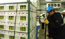 El sector agropecuario creció gracias a las exportaciones de paltas y espárragos (en la foto).