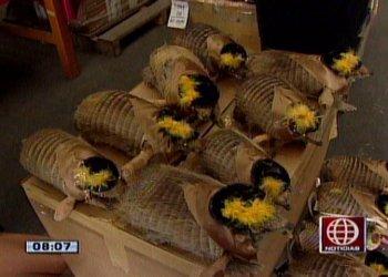 Salvajismo: Sacrifican armadillos para hacer matracas en Puno