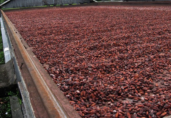 Europa adquirirá cacao fino y de aroma peruano a partir del 2016.