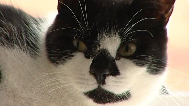 Jueza prohíbe comer gato en festividades de Cañete