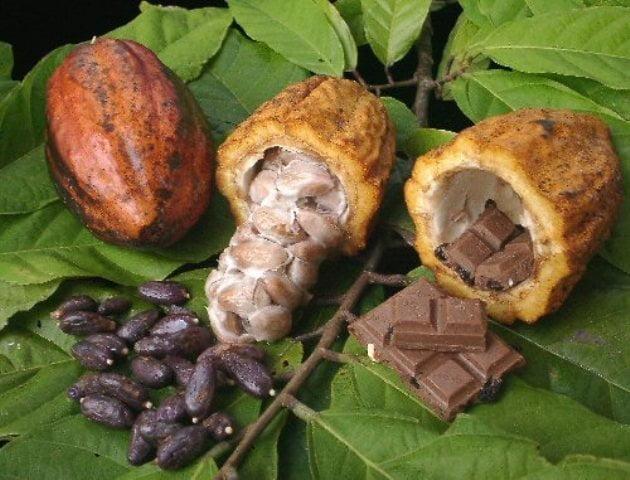 El cacao recibió la distinción de PRODUCTO BANDERA.
