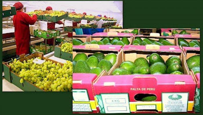 Las uvas y paltas  son dos de los  productos más demandados por el mercado español.