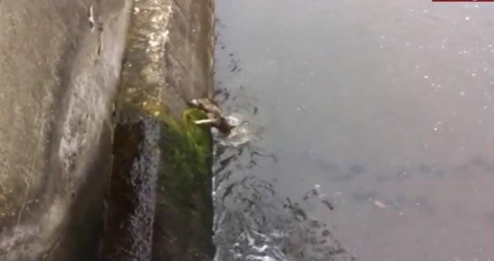 [VIDEO] Así celebró este perrito rescatado de una muerte segura